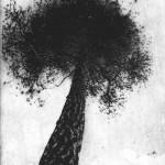 Puu misä aina putoan, fotoetsaus